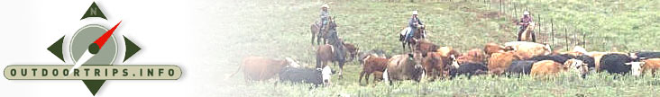 Cattle Drive Vacations, Cattle Drive Adventure Travel, Cattle Drive Trips, Montana Cattle Drive